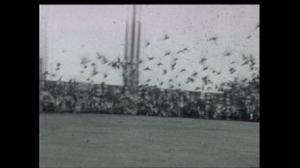 duivenvlucht